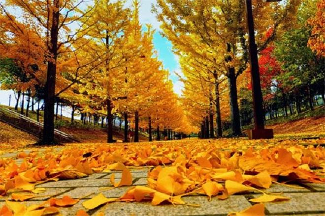 Bạn nên lựa chọn thời điểm quan hệ vào mùa thu