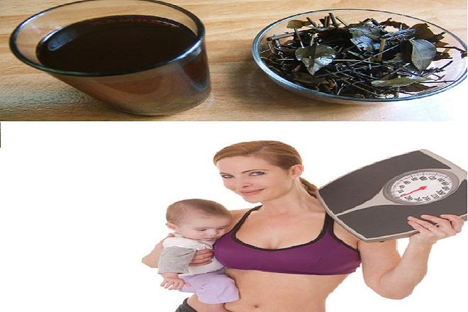 uống chè vằng lợi sữa và giảm cân siêu tốc sau sinh