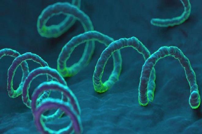 vi khuẩn bệnh xã hội