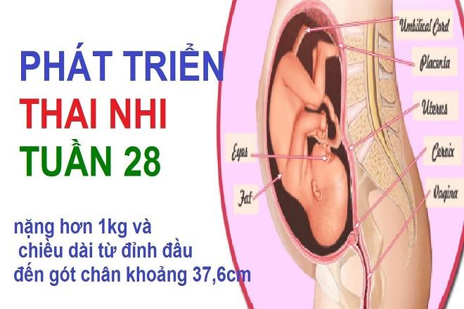sự phát triển của thai nhi tuần 28