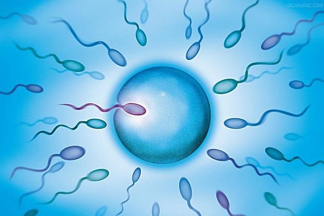 quá trình di chuyển của tinh trùng với trứng