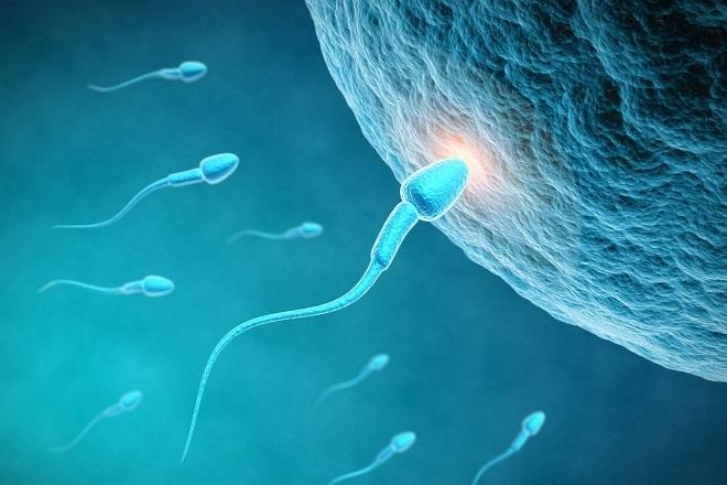 quá trình kết hợp trứng và tinh trùng