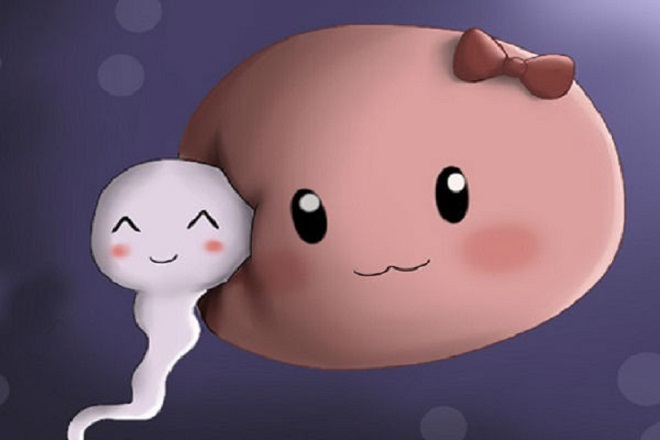 rụng trứng bao lâu thì thụ thai giữa trứng và tinh trùng