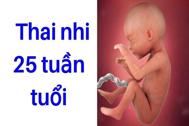 sự phát triển của thai nhi 25 tuần tuổi