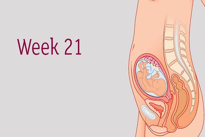 sự phát triển của thai nhi tuần thứ 21