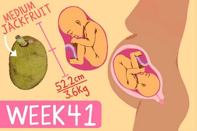 thai nhi tuần thứ 41