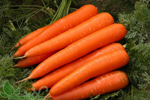 bổ sung cà rốt giàu vitamin sẽ tốt cho hệ tiêu hóa của các mẹ sau sinh