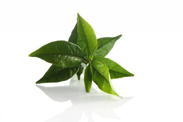 làm đẹp bằng lá trà xanh