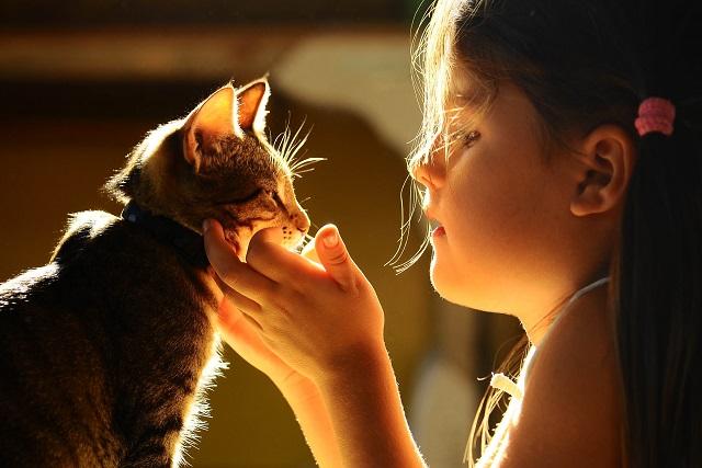 bé gái nựng mèo