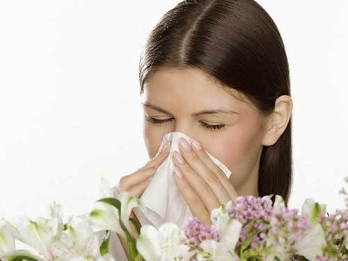 Cách chữa bệnh viêm mũi dị ứng mãn tính bằng thuốc nam