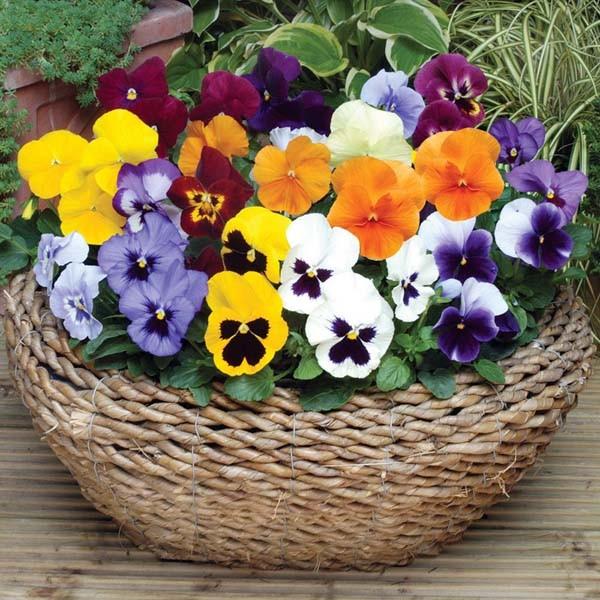 Các loại hoa dễ trồng trong chậu có thể tự chăm sóc tại nhà