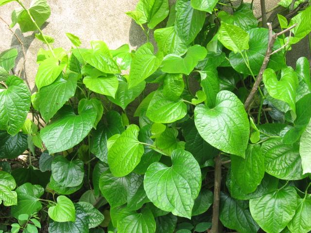 Một số loại cây được trồng bằng cách giâm cành