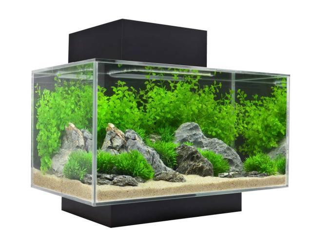 Cách đặt bể cá cảnh trong nhà theo phong thủy