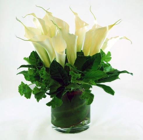 12 loài hoa đẹp có chất kịch độc chết người
