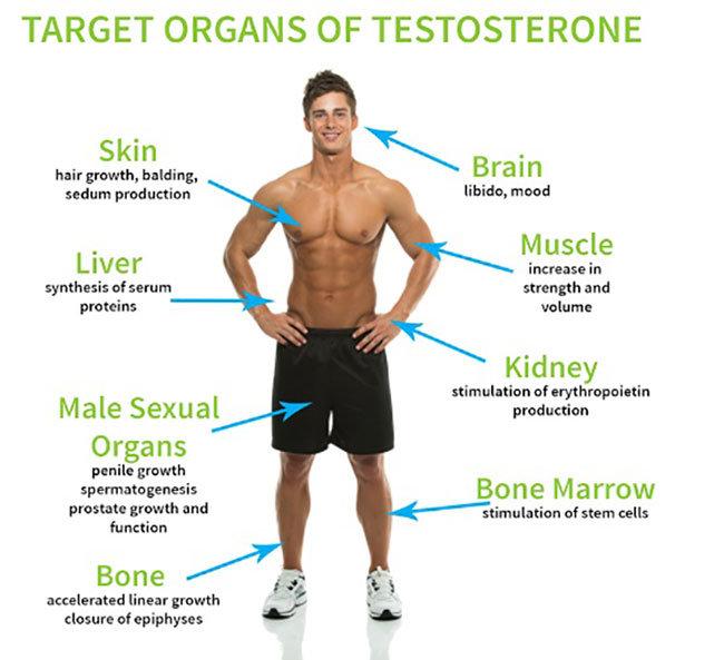 Lượng testosterone là gì & có tác dụng gì?